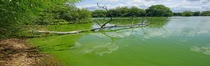 algae control in Central Florida lakes and ponds