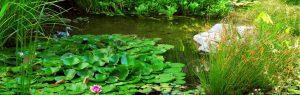 Benefits of aquatic plants - Central Florida Aquatic Services