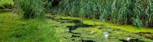 Dangers of Algae Growth