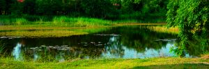 Difference of Lakes and Ponds