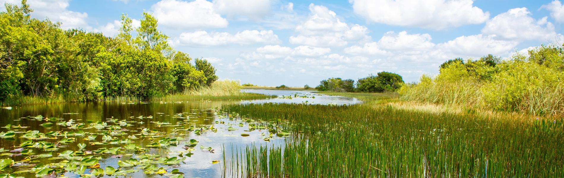 The Importance of Florida Wetlands