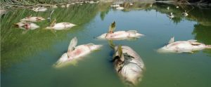 Causes of Fish Kills