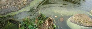 Danger of Fertilizer Runoff for Lakes
