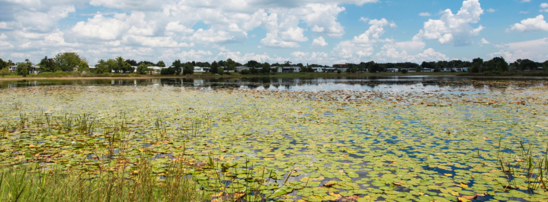 Do You Need a Permit to Manage Aquatic Plants?