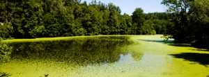 Why Lakes Contain Algae in Central Florida