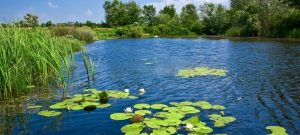 Pond Maintenance Tips for Fall