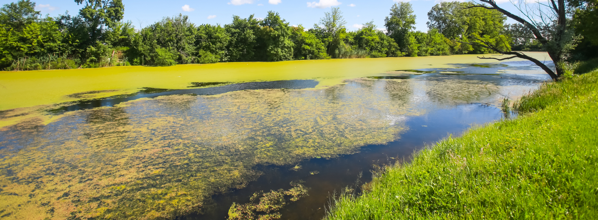 Spotting and Avoiding Harmful Algal Blooms