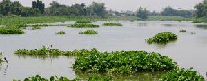 Florida's Top Invasive Plant Species