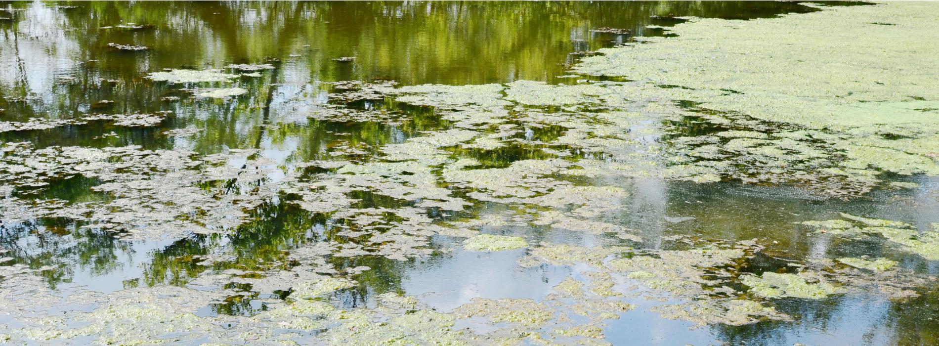 Oviedo Aquatic Weed Control