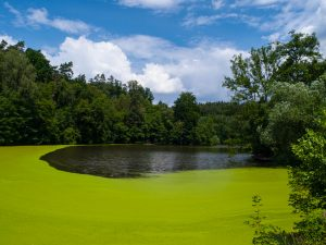 Winter Springs Algae Control