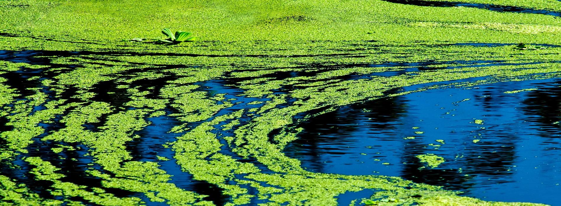 Winter Park Algae Control